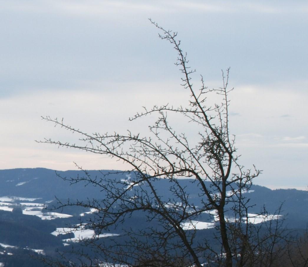 http://www.bayerwaldwandern.de/2019/bild3.jpg