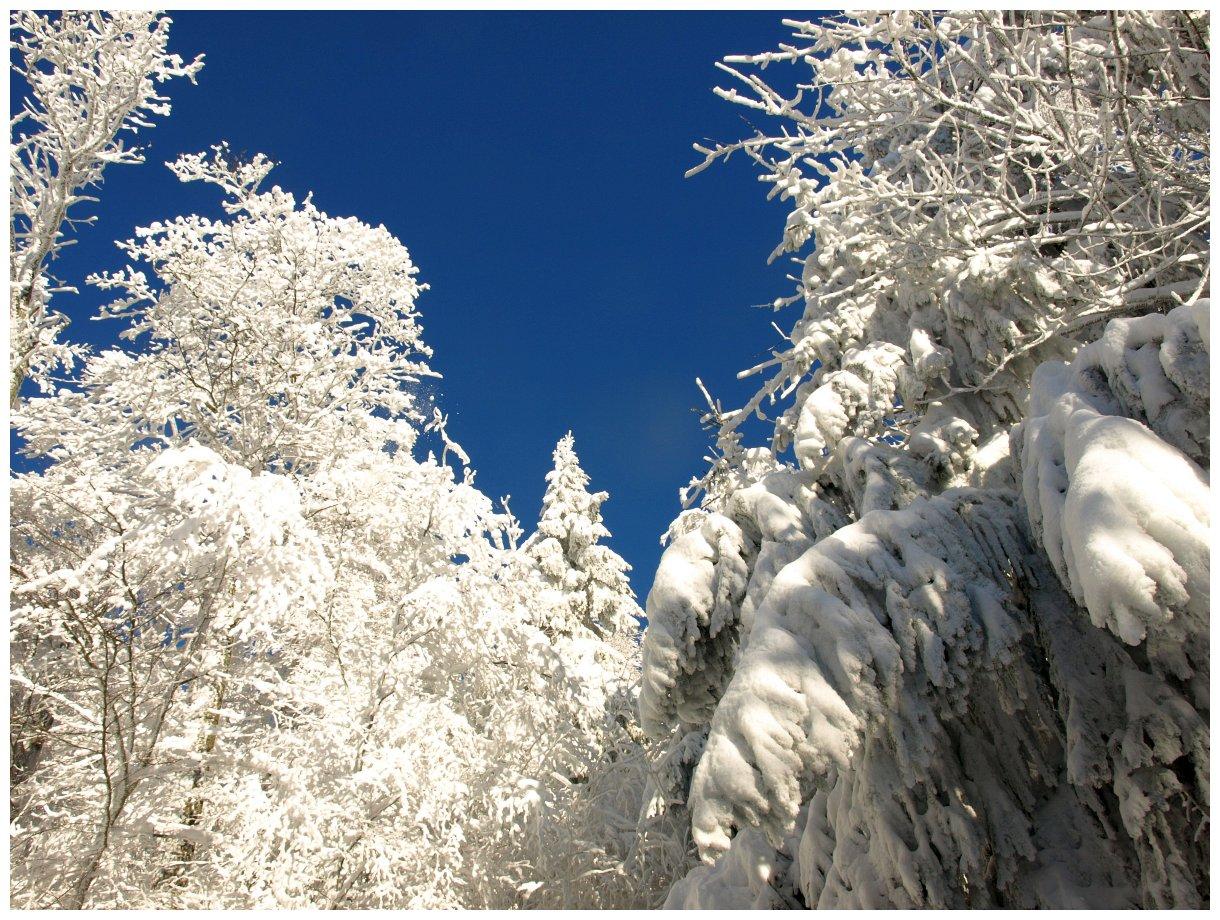 http://www.bayerwaldwandern.de/Januar15/6jan15_08.jpg