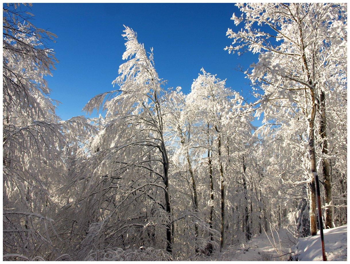 http://www.bayerwaldwandern.de/Januar15/6jan15_10.jpg