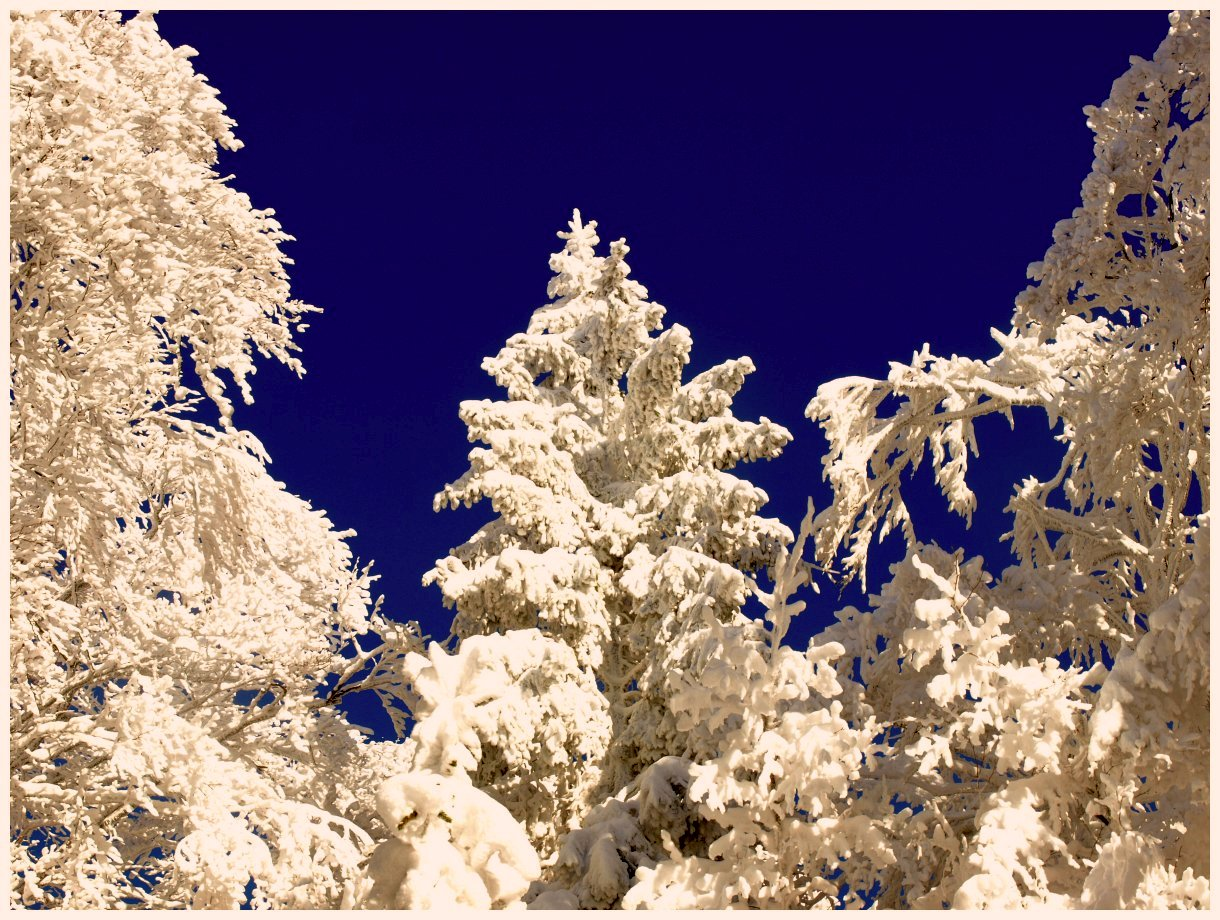 http://www.bayerwaldwandern.de/Januar15/6jan15_11.jpg