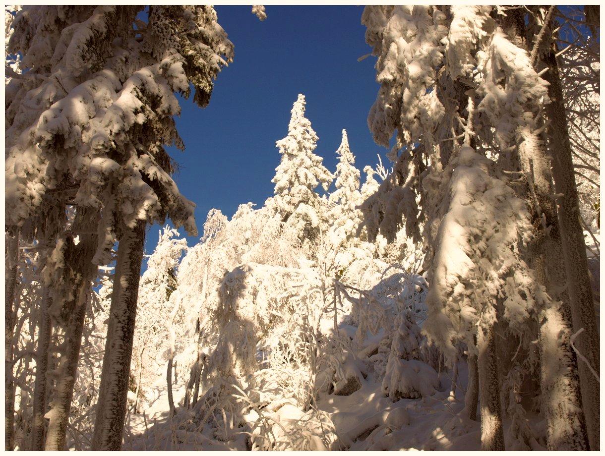 http://www.bayerwaldwandern.de/Januar15/6jan15_12.jpg