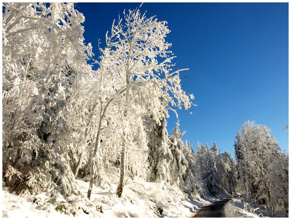 http://www.bayerwaldwandern.de/Januar15/6jan15_15.jpg