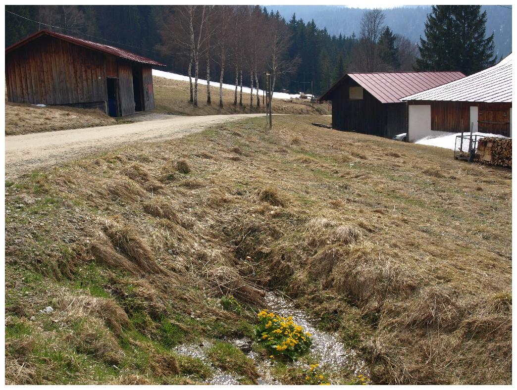 http://www.bayerwaldwandern.de/april12/9april12_33.jpg