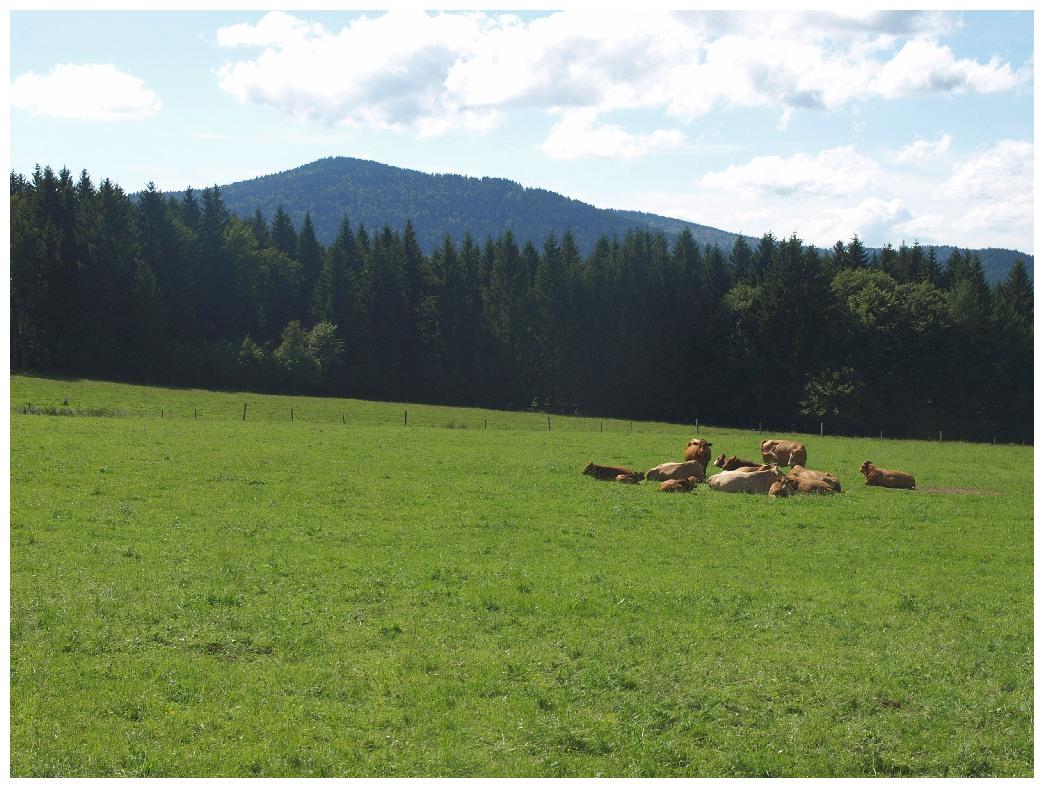 http://www.bayerwaldwandern.de/august12/5aug12_12.jpg