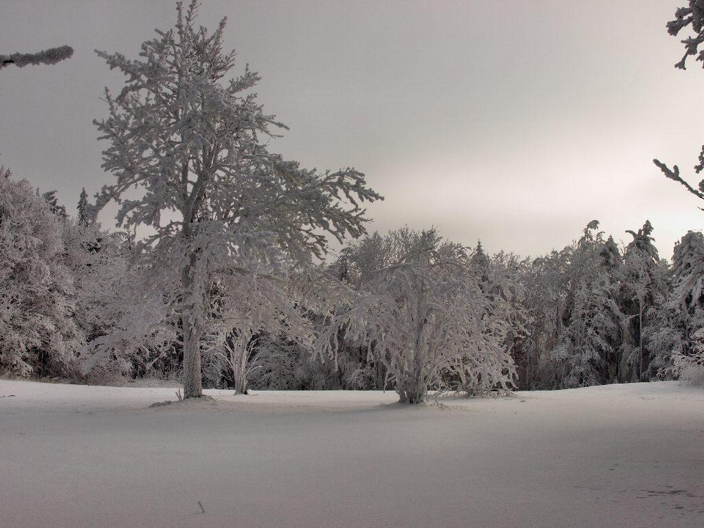 http://www.bayerwaldwandern.de/januar10/16jan10_04.jpg