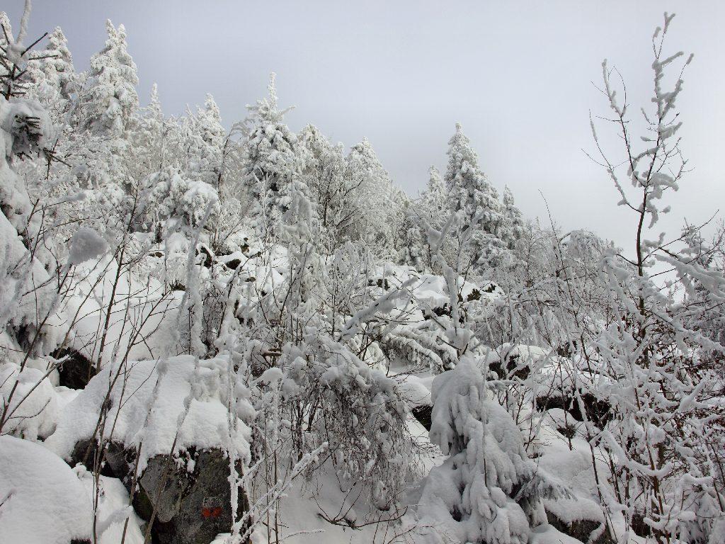 http://www.bayerwaldwandern.de/januar10/16jan10_05.jpg
