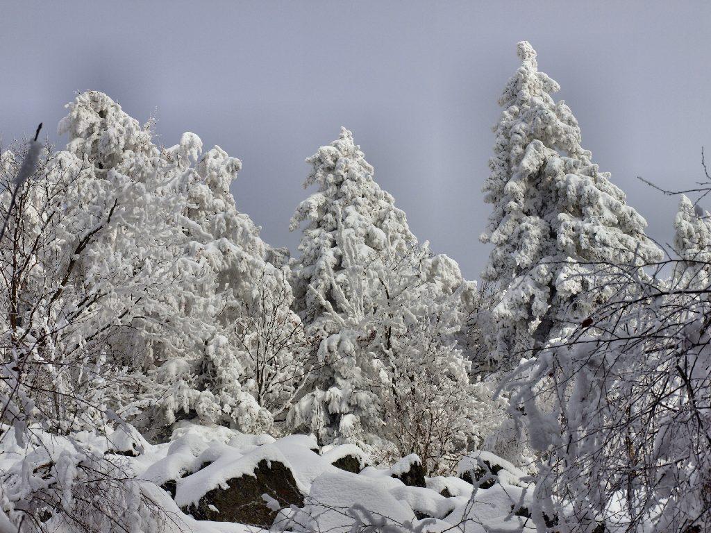 http://www.bayerwaldwandern.de/januar10/16jan10_06.jpg