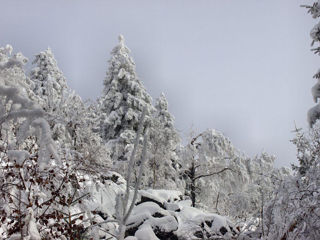 http://www.bayerwaldwandern.de/januar10/16jan10_07.jpg