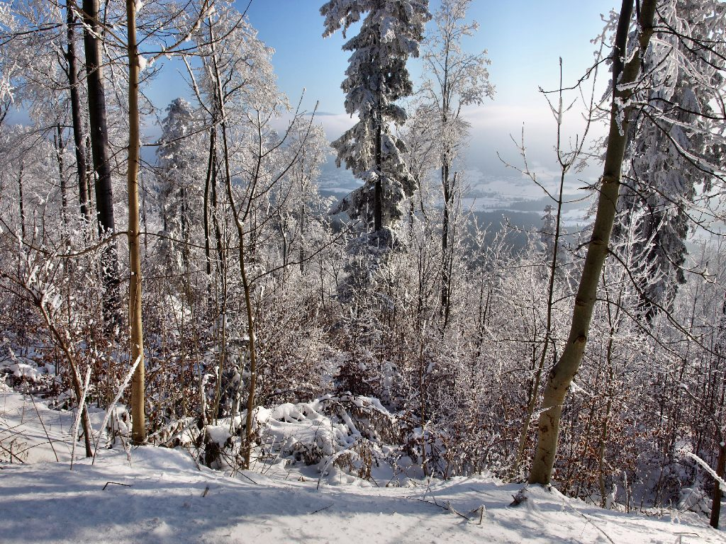 http://www.bayerwaldwandern.de/januar10/16jan10_22.jpg
