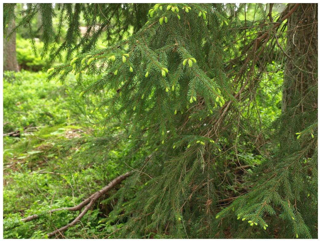 http://www.bayerwaldwandern.de/juni12/7juni12_02.jpg