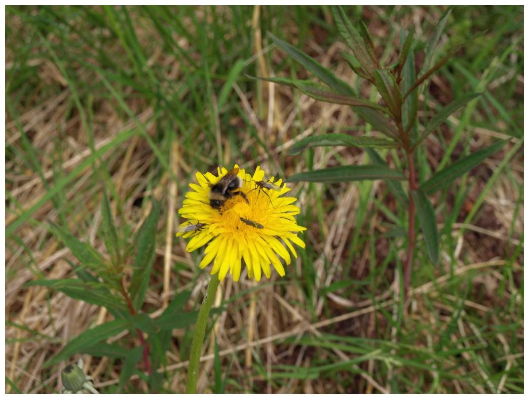 http://www.bayerwaldwandern.de/juni12/7juni12_04.jpg