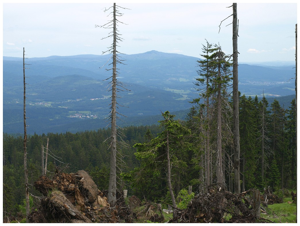 http://www.bayerwaldwandern.de/juni12/7juni12_07.jpg