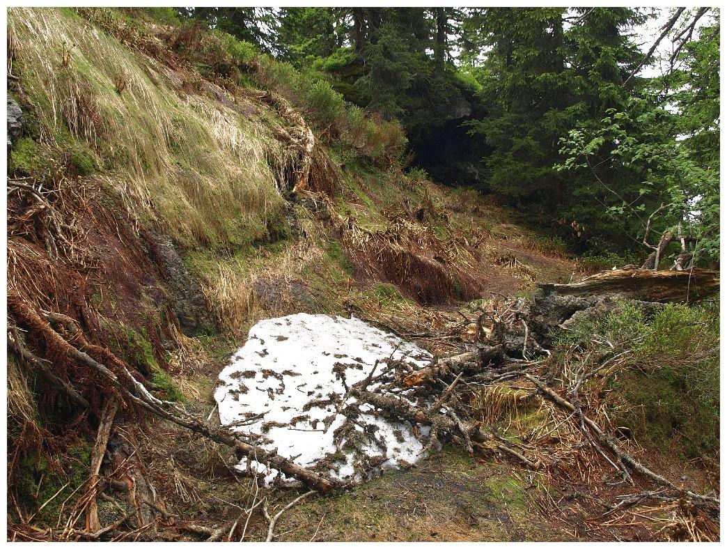 http://www.bayerwaldwandern.de/juni12/7juni12_14.jpg