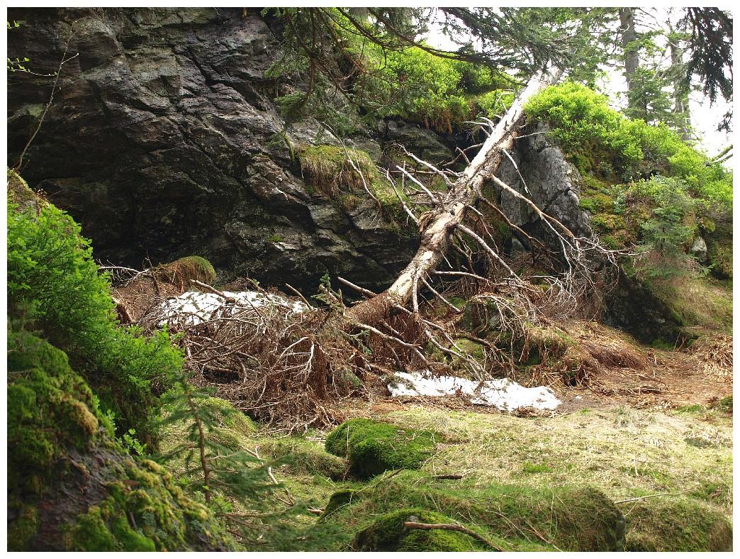 http://www.bayerwaldwandern.de/juni12/7juni12_16.jpg