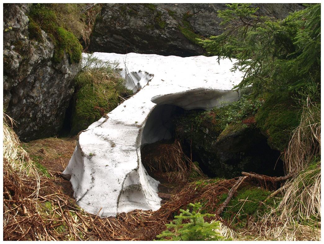 http://www.bayerwaldwandern.de/juni12/7juni12_21.jpg