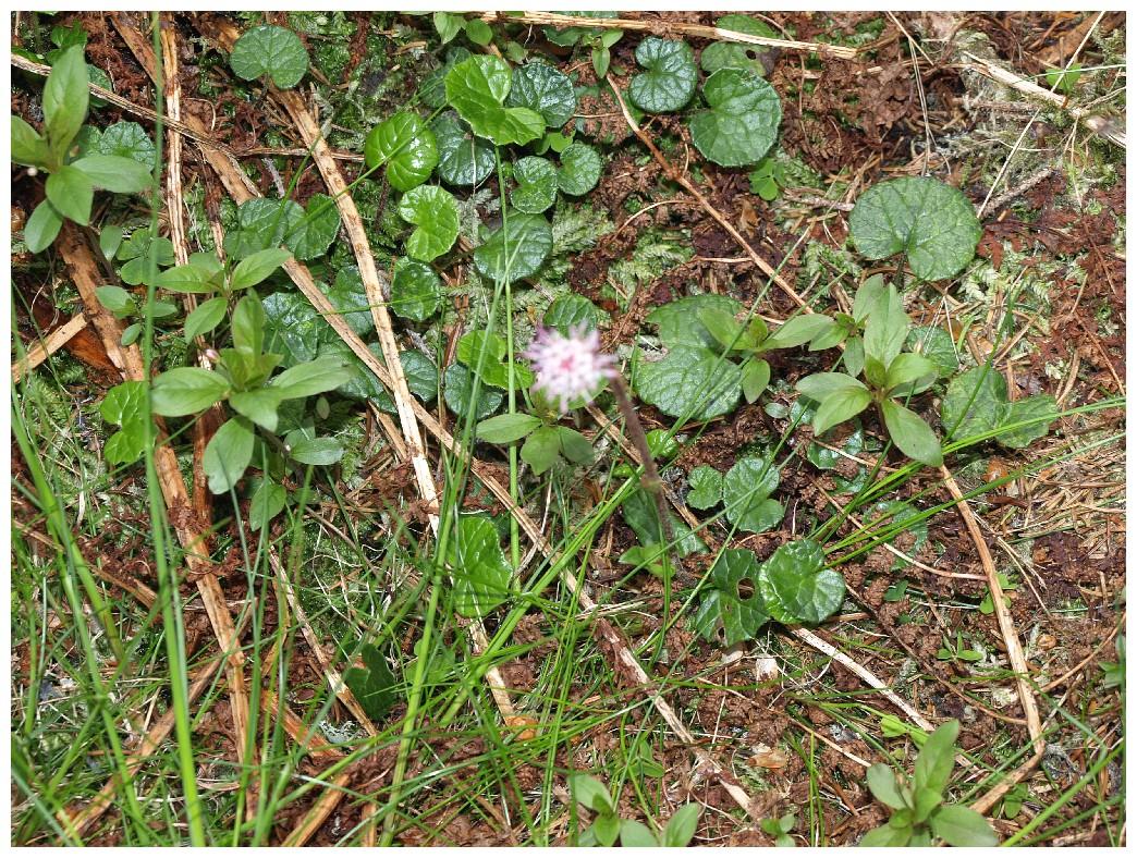 http://www.bayerwaldwandern.de/juni12/7juni12_23.jpg