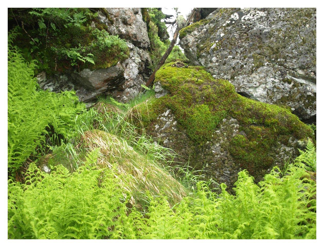 http://www.bayerwaldwandern.de/juni15/23juni15_8.jpg