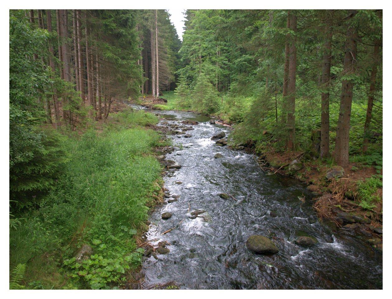 http://www.bayerwaldwandern.de/juni15/24juni15_7.jpg