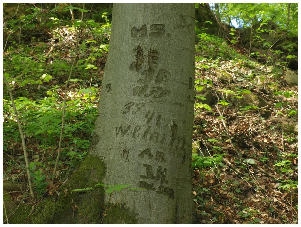 http://www.bayerwaldwandern.de/mai12/1mai12_05.jpg
