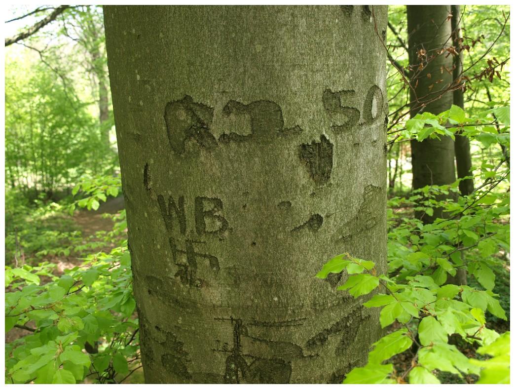 http://www.bayerwaldwandern.de/mai12/1mai12_17.jpg