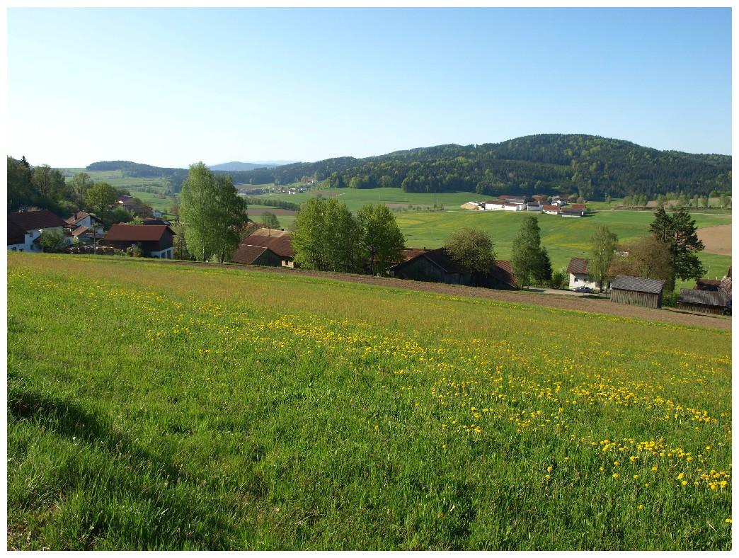 http://www.bayerwaldwandern.de/mai12/1mai12_19.jpg