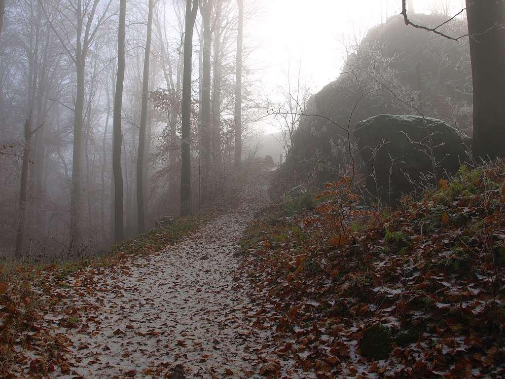 http://www.bayerwaldwandern.de/november11/24nov11_11.jpg