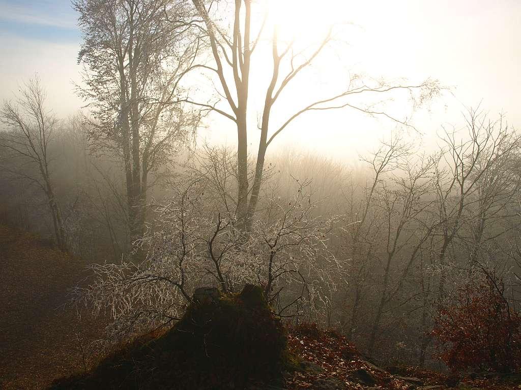 http://www.bayerwaldwandern.de/november11/24nov11_16.jpg