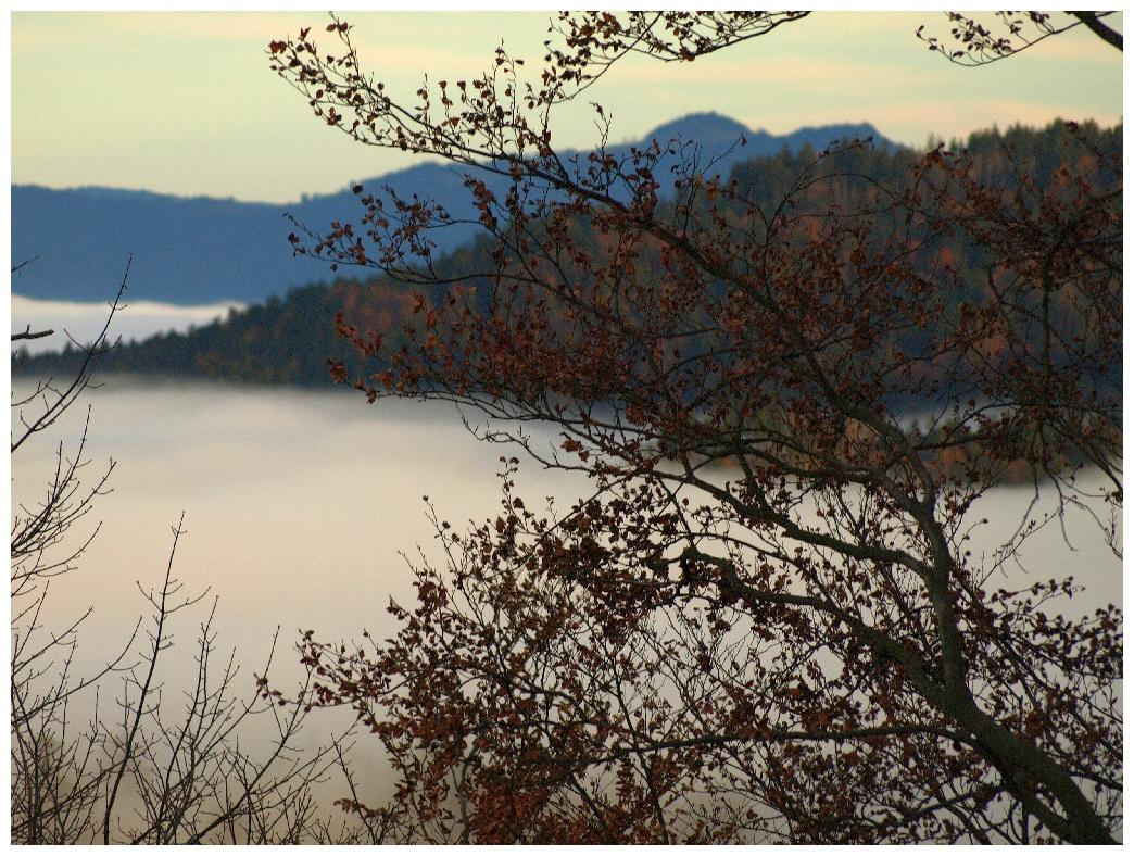 http://www.bayerwaldwandern.de/november11/5nov11_19.jpg