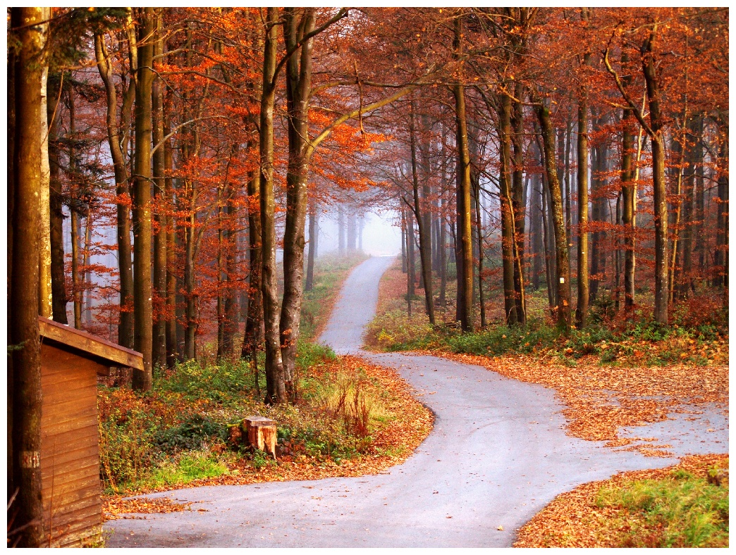 http://www.bayerwaldwandern.de/november11/5nov11_22.jpg