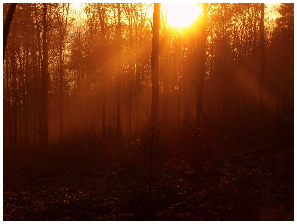 http://www.bayerwaldwandern.de/november11/5nov11_24.jpg