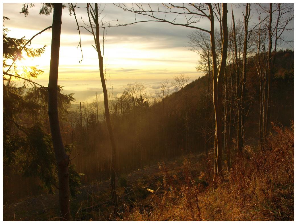 http://www.bayerwaldwandern.de/november11/5nov11_25.jpg
