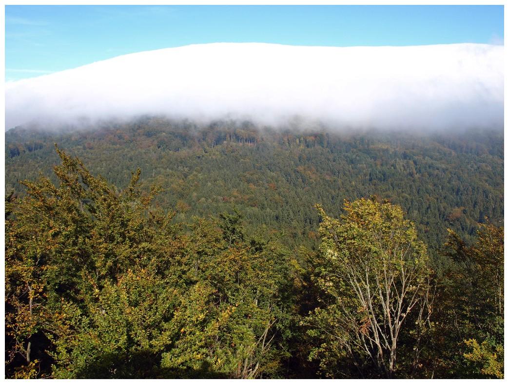 http://www.bayerwaldwandern.de/oktober10/3okt10_07.jpg
