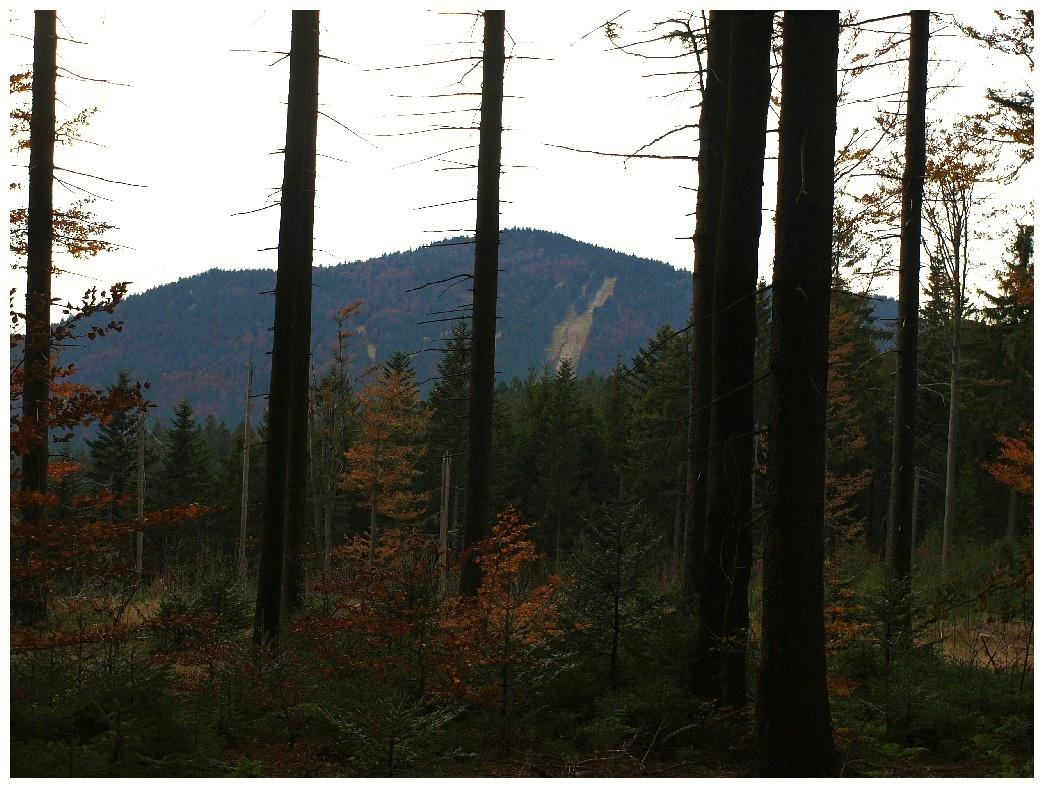 http://www.bayerwaldwandern.de/oktober11/30okt11_19.jpg