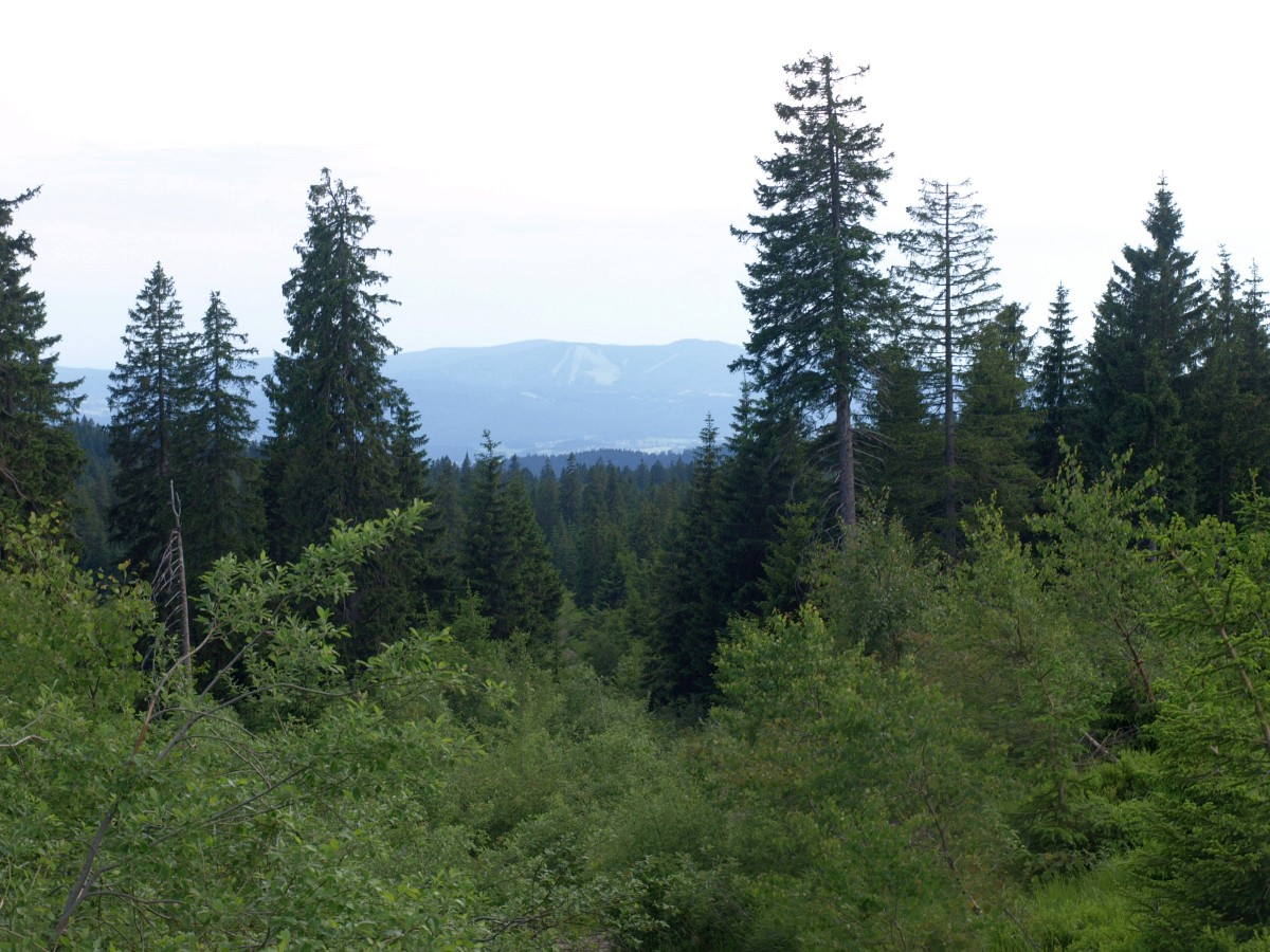 https://www.bayerwaldwandern.de/2019/200619_13.jpg