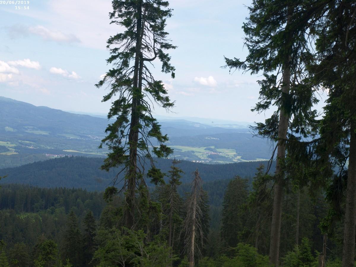 https://www.bayerwaldwandern.de/2019/200619_4.jpg