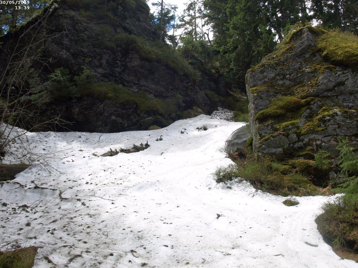https://www.bayerwaldwandern.de/2019/300519_12.jpg